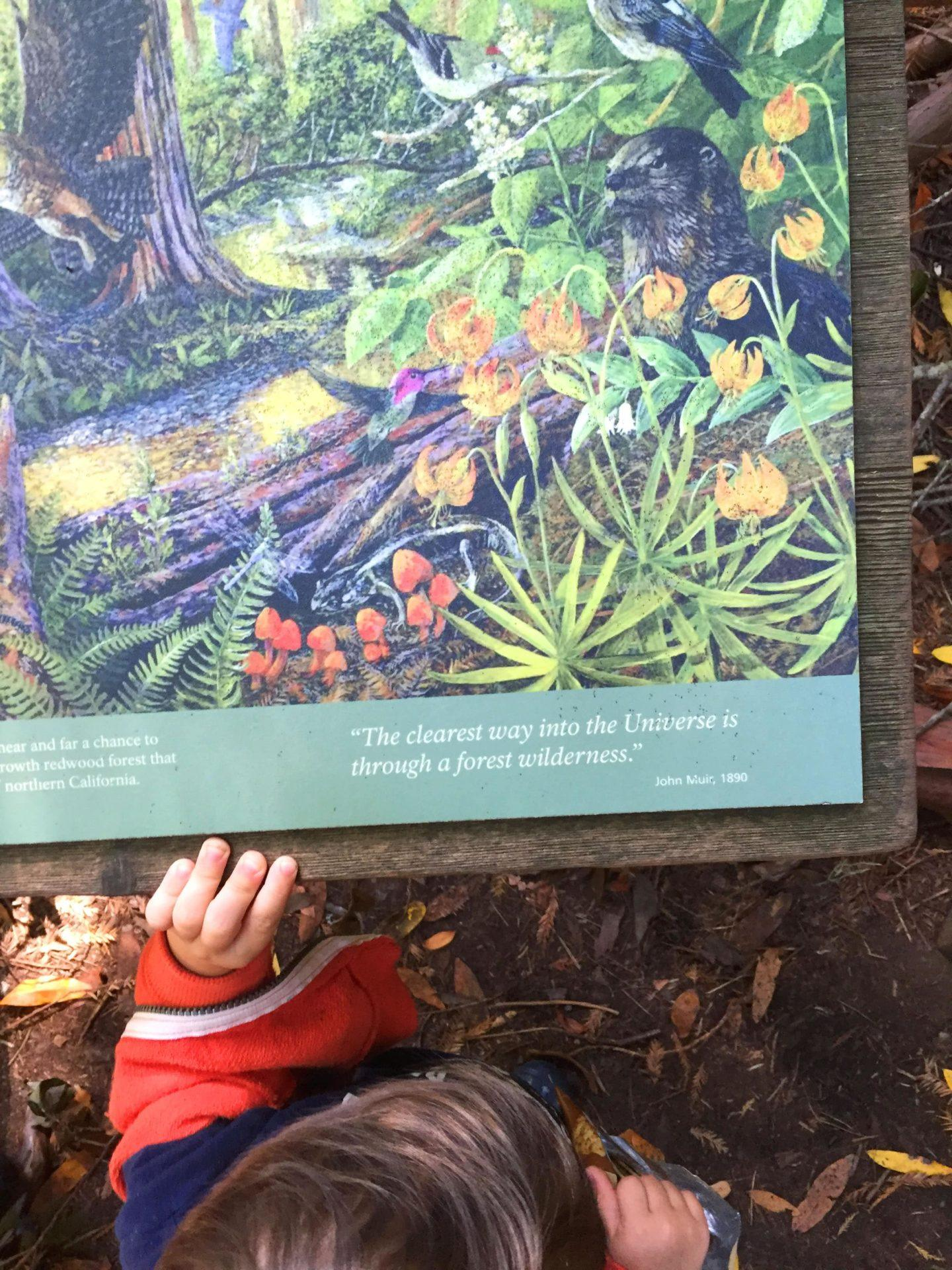 Adventures for Kids in San Francisco Muir Woods 02