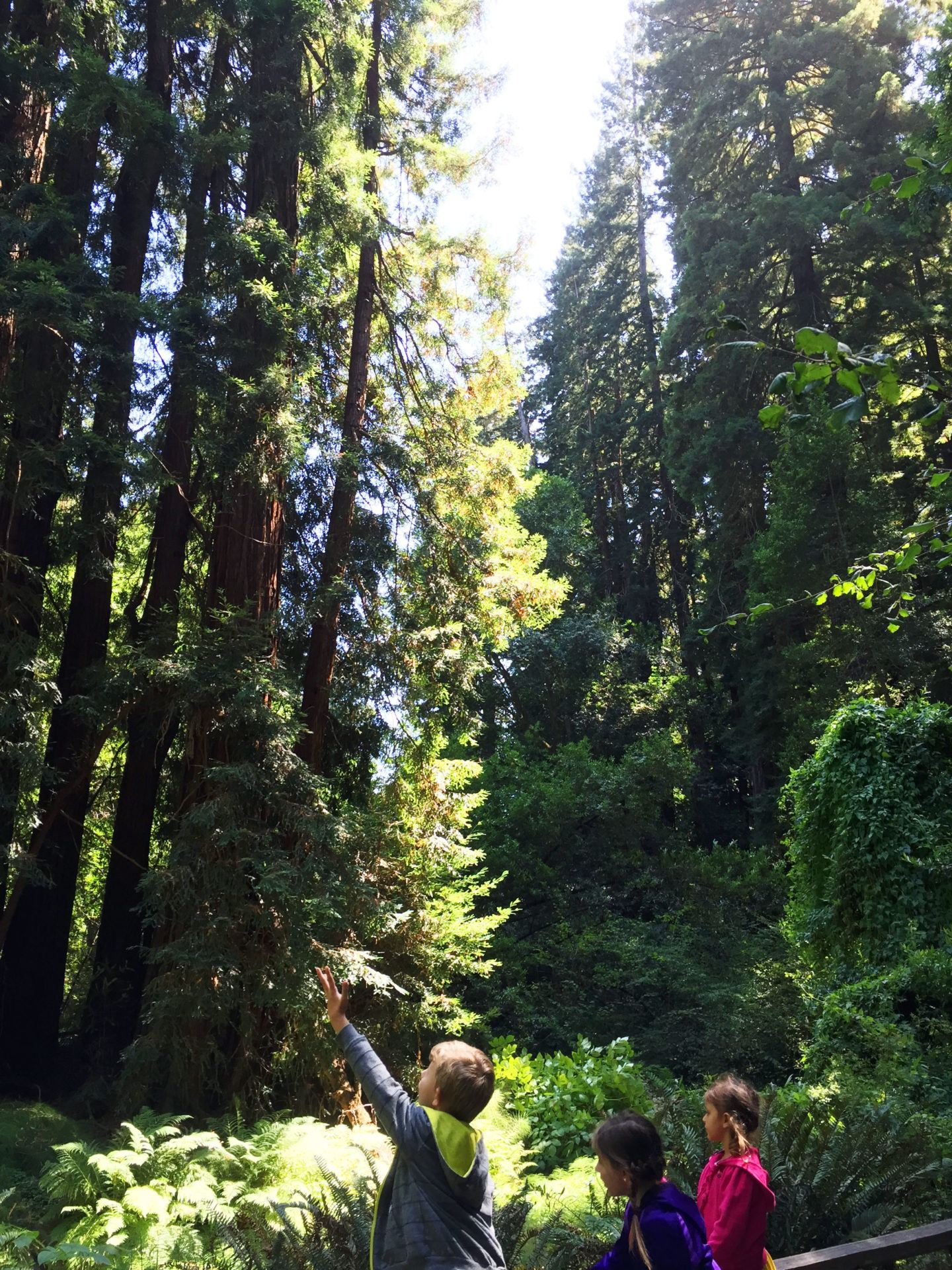 Adventures for Kids in San Francisco Muir Woods 03