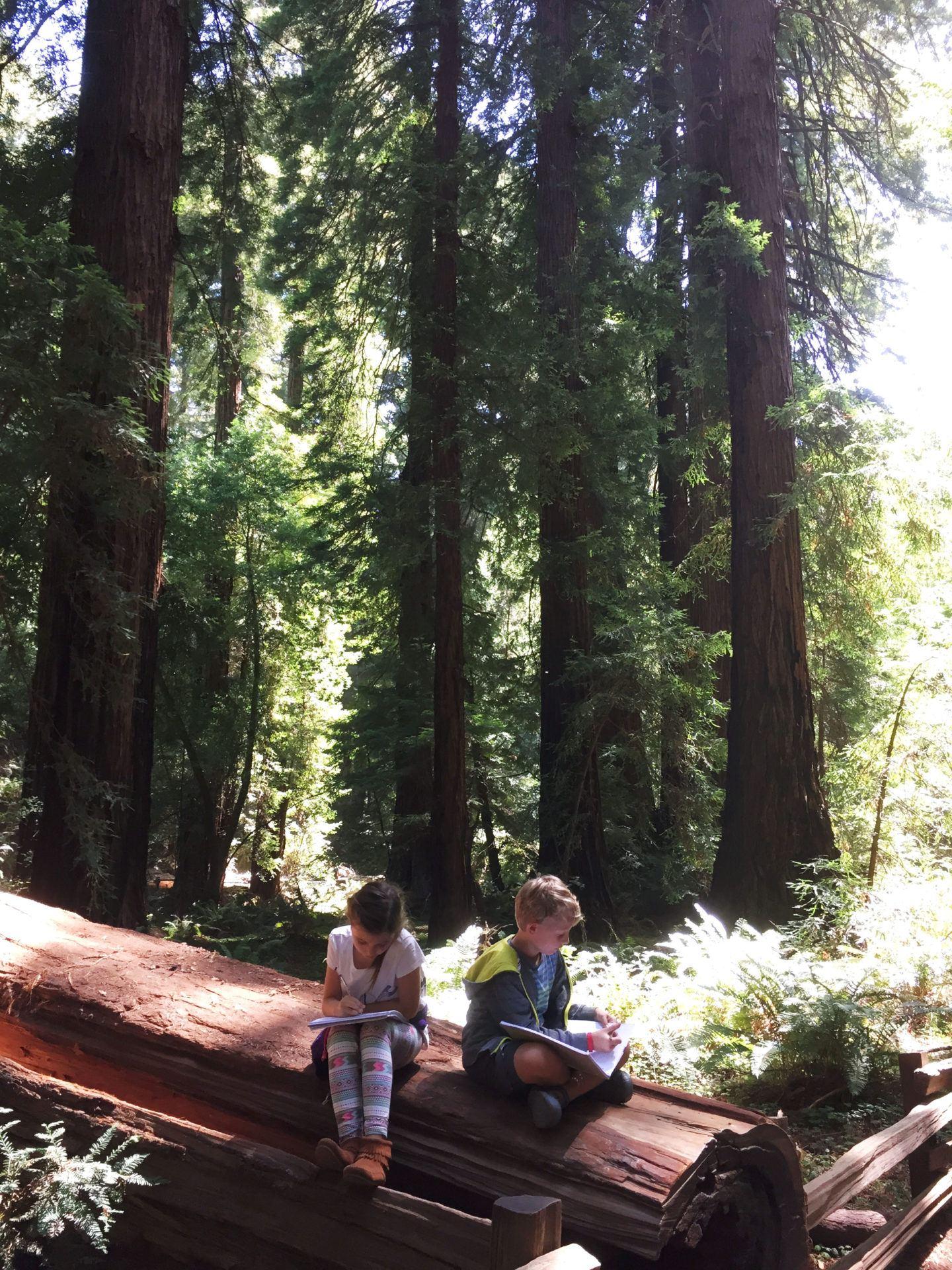 Adventures for Kids in San Francisco Muir Woods 05