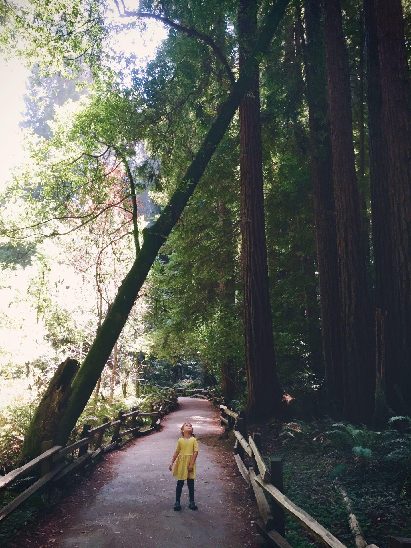 Adventures for Kids in San Francisco Muir Woods 06