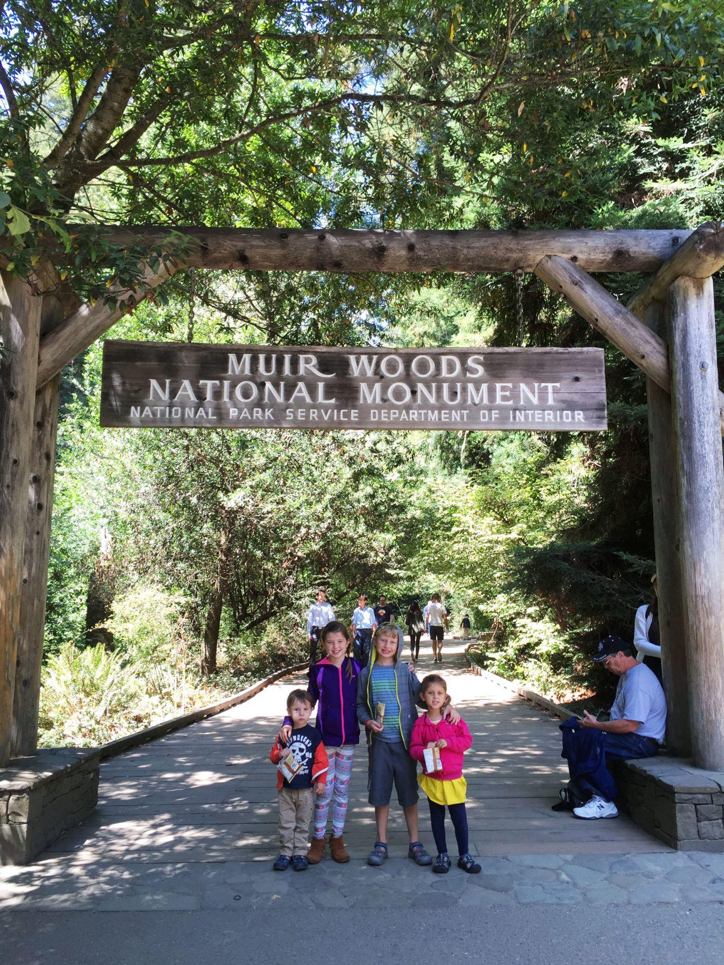 Adventures for Kids in San Francisco Muir Woods