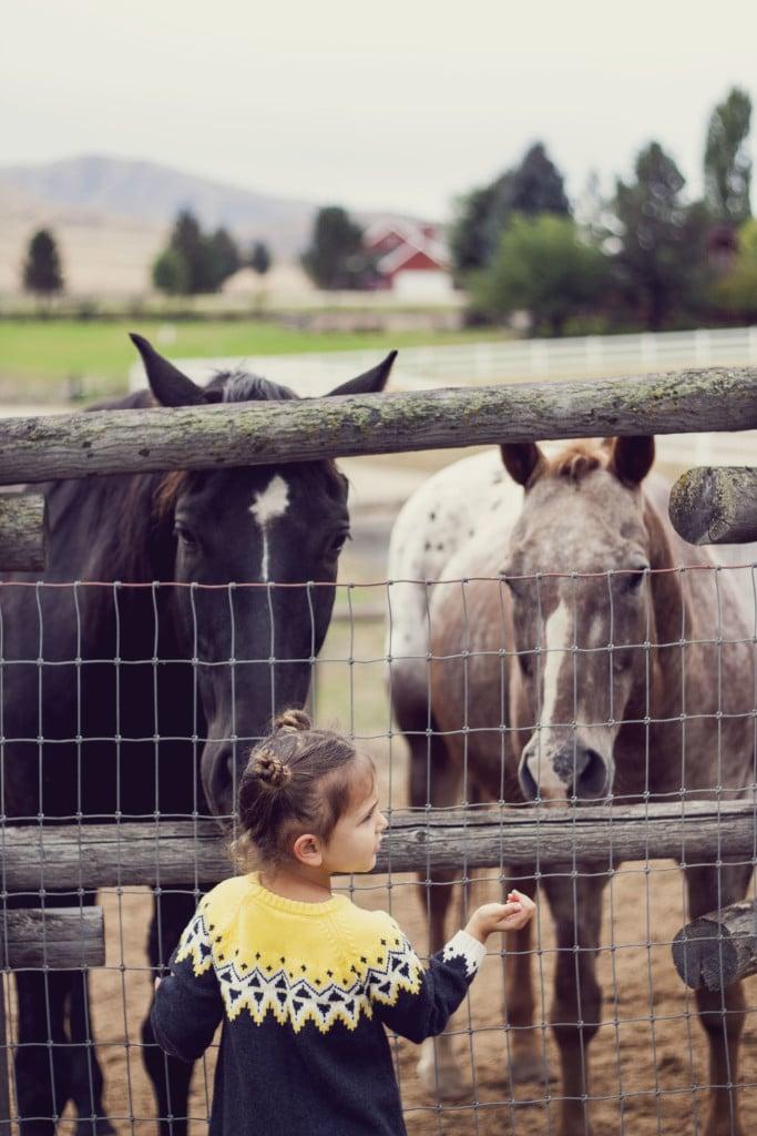 Feeding Horses on the Farm in Idaho