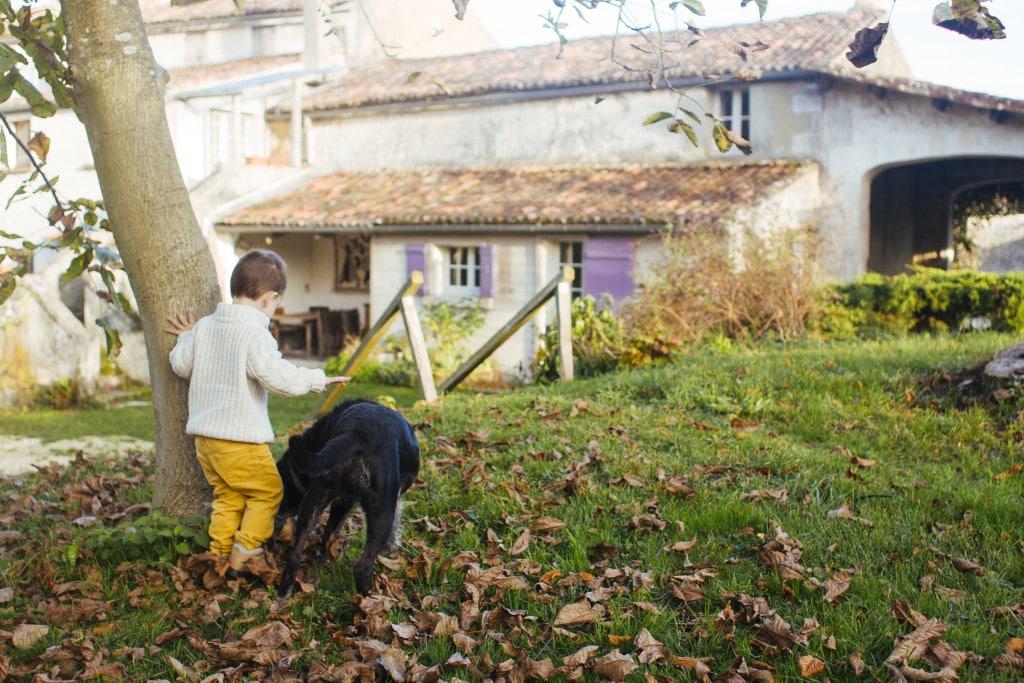 Le Petit Logis Dog