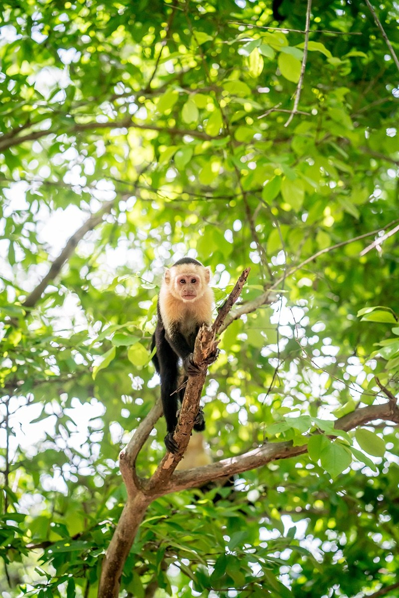Andaz Papagayo Costa Rica
