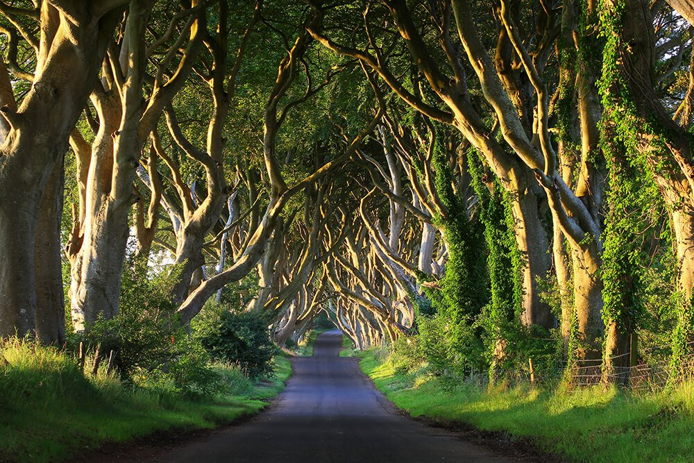 The Best Places to Visit in Ireland Dark Hedges