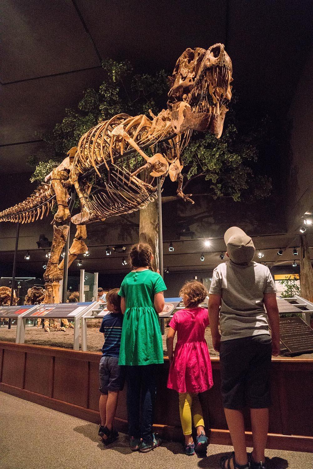 dinosaur museum montana