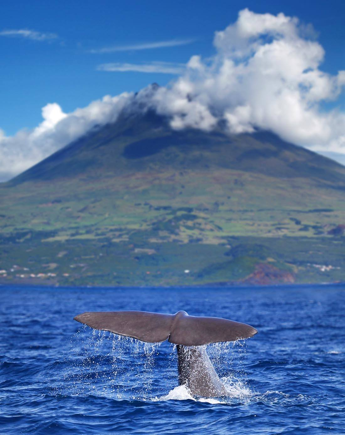 Sao Miguel Island Whale Watching Azores