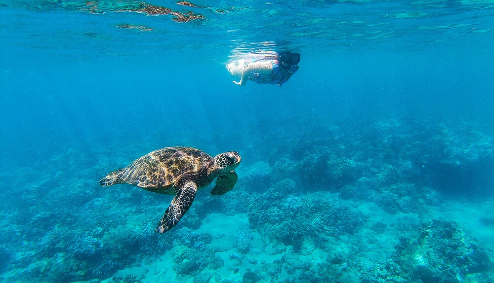 Best things to do in Oahu Swim with Sea Turtles