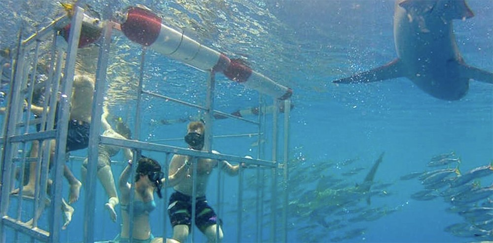 Best things to do in Oahu Shark Dive